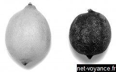 Test magnetisme citron